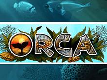 Автомат Orca на доступном зеркале