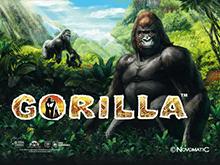 Автомат Gorilla в онлайн казино